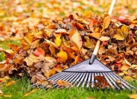 autumn leaves rake